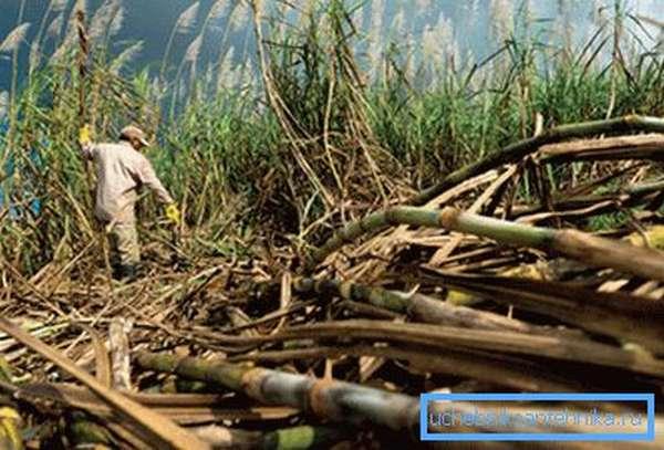 Бразилия самая крупная страна по производству этанола из сахарного тростника