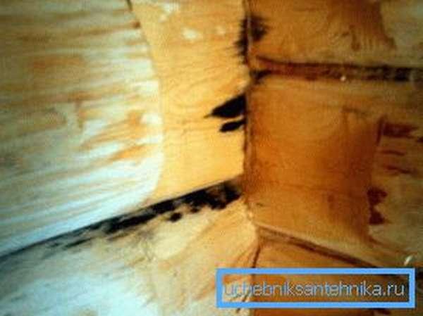 Фото плесени на стенах парильной комнаты, появившейся в результате слабого проветривания