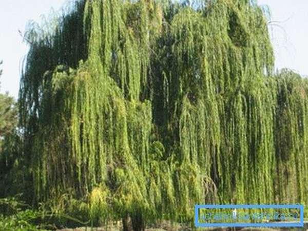 Имеющаяся растительность на участке может помочь в поиске оптимального места для скважины или колодца.