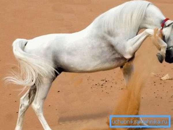 Лошадь чувствует влагу