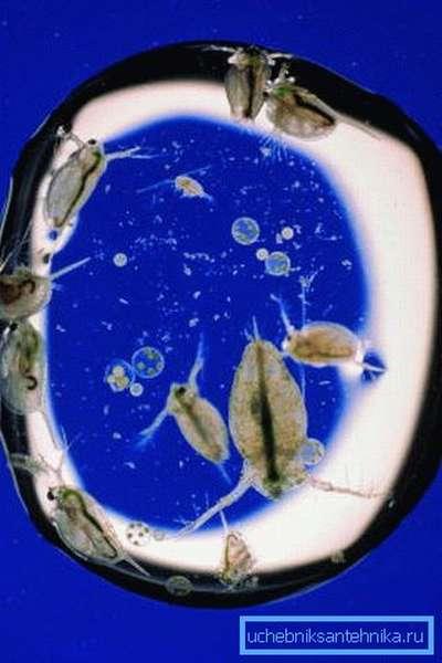 Микроорганизмы в капле воды под микроскопом.