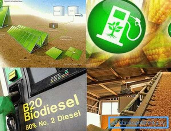 На фото – биотопливо можно производить из различного органического сырья