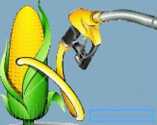 Наиболее сегодня перспективной культурой для биотоплива считается кукуруза