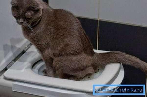 Нужно подождать, пока кошка привыкнет пользоваться лотком, установленным на унитазе