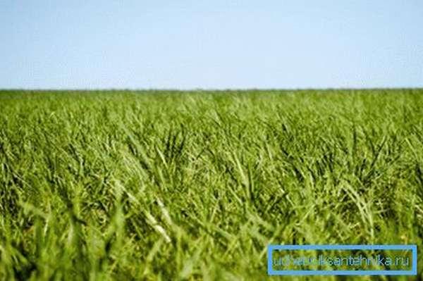 Сырьем для производства биотоплива служит органика