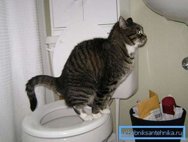 Убираем имитацию и любуемся ученым котом.