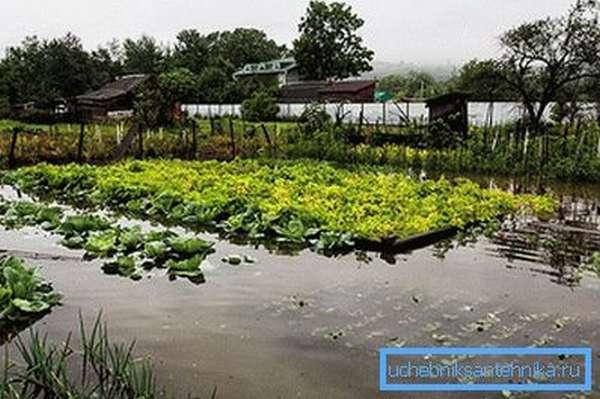 Затопленный участок огорода